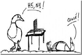 grippe_aviaire1