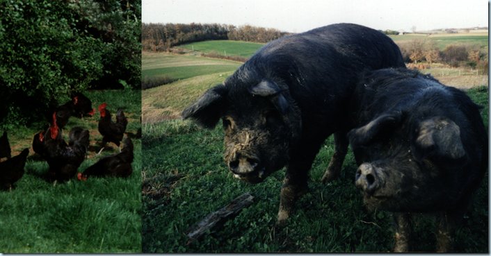 porcs et poles