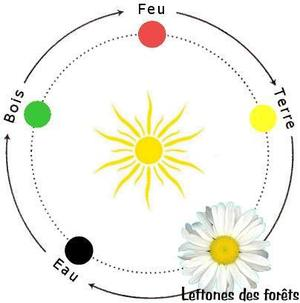 Cycle_de_vie