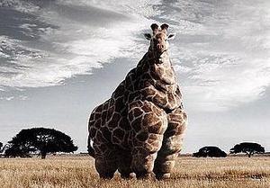 Girafe_aux_hormones_2